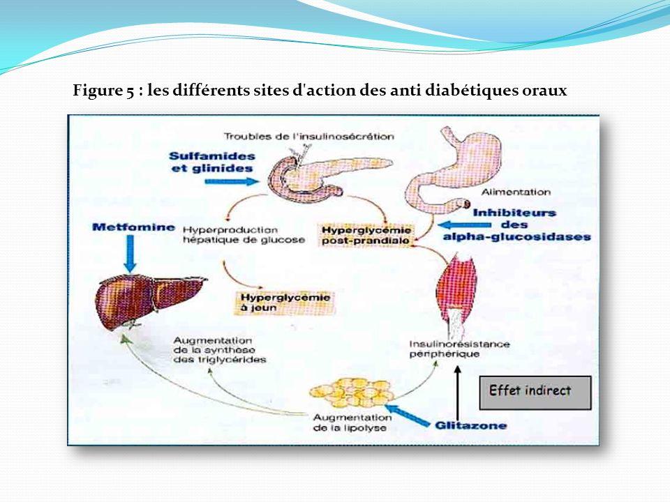 Figure 5 : les différents sites d action des anti diabétiques oraux