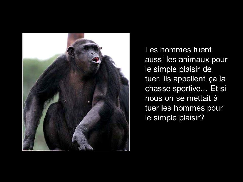 Les hommes tuent aussi les animaux pour le simple plaisir de tuer