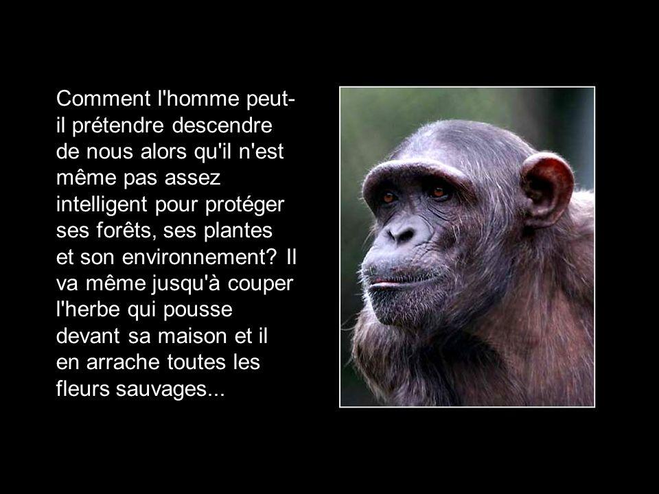 R cemment dans le monde des singes une incroyable - Comment tuer un arbre sans le couper ...