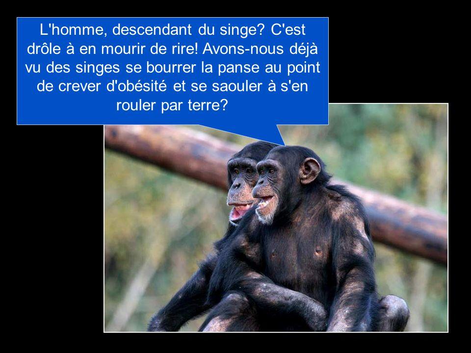 L homme, descendant du singe. C est drôle à en mourir de rire