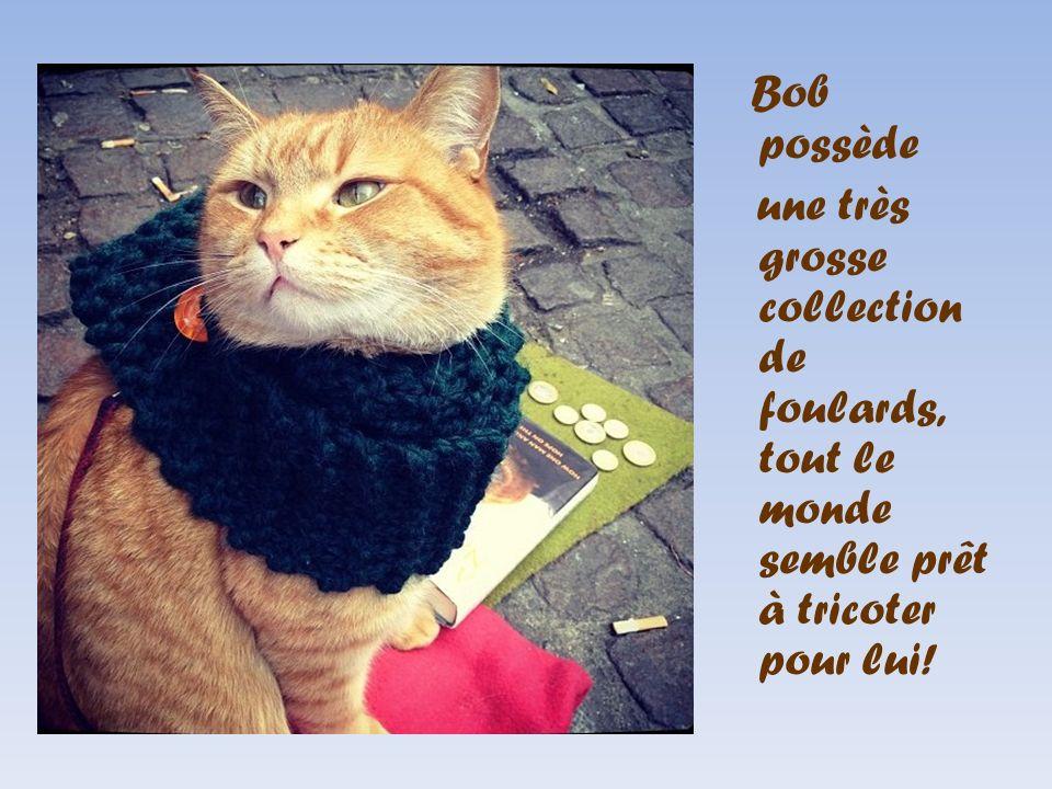 Bob possède une très grosse collection de foulards, tout le monde semble prêt à tricoter pour lui!