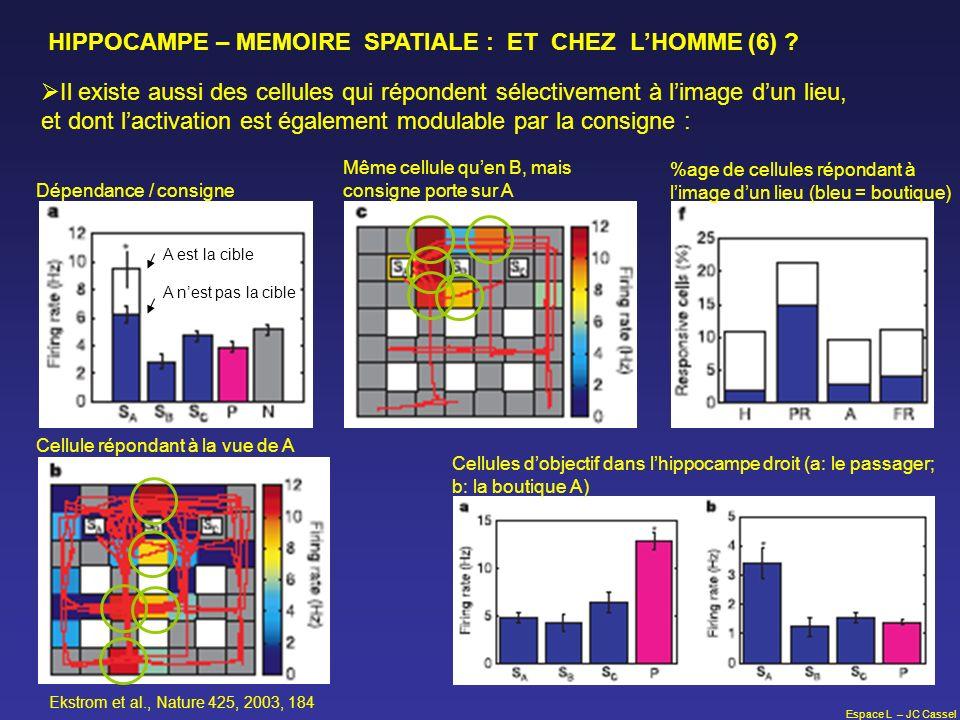 HIPPOCAMPE – MEMOIRE SPATIALE : ET CHEZ L'HOMME (6)