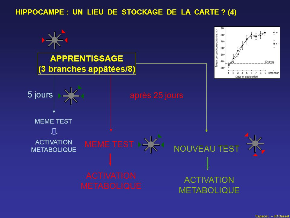 ACTIVATION METABOLIQUE