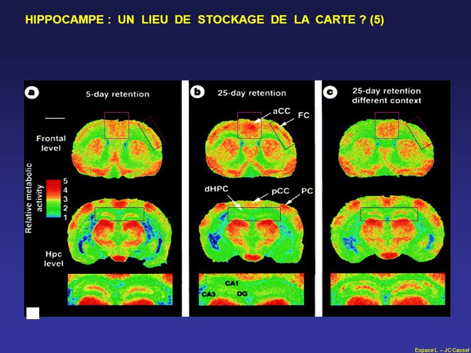HIPPOCAMPE : UN LIEU DE STOCKAGE DE LA CARTE (5)