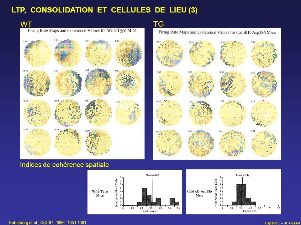 LTP, CONSOLIDATION ET CELLULES DE LIEU (3)