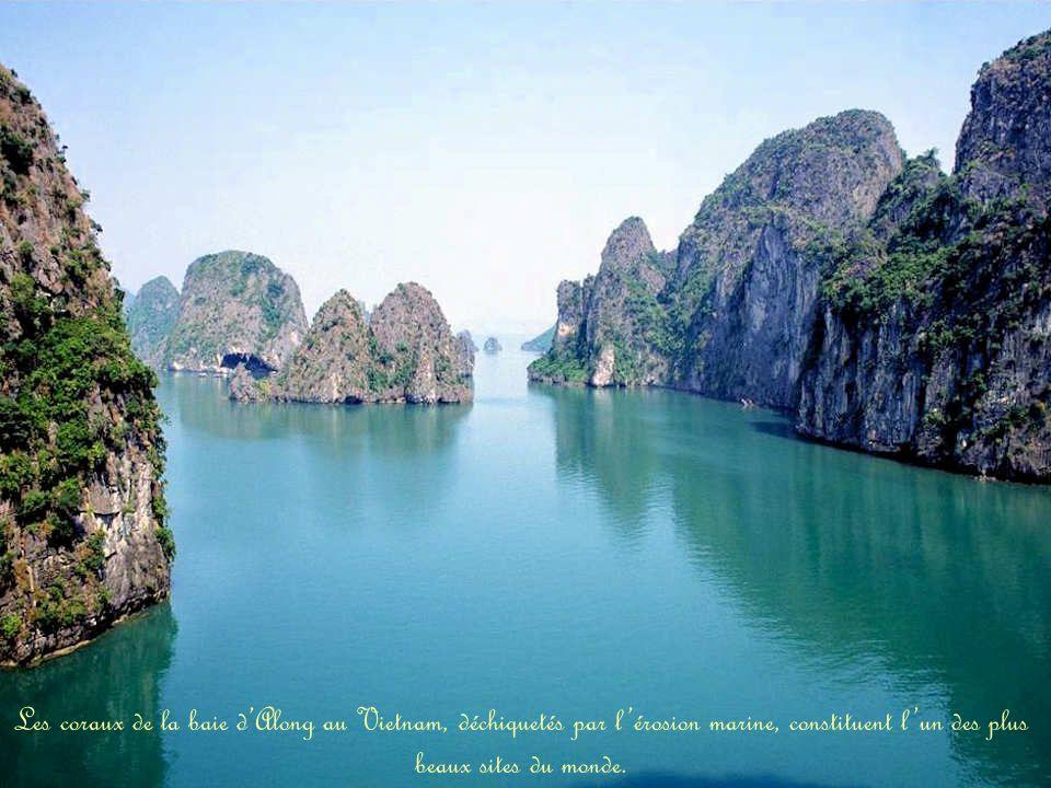 Les coraux de la baie d'Along au Vietnam, déchiquetés par l'érosion marine, constituent l'un des plus beaux sites du monde.