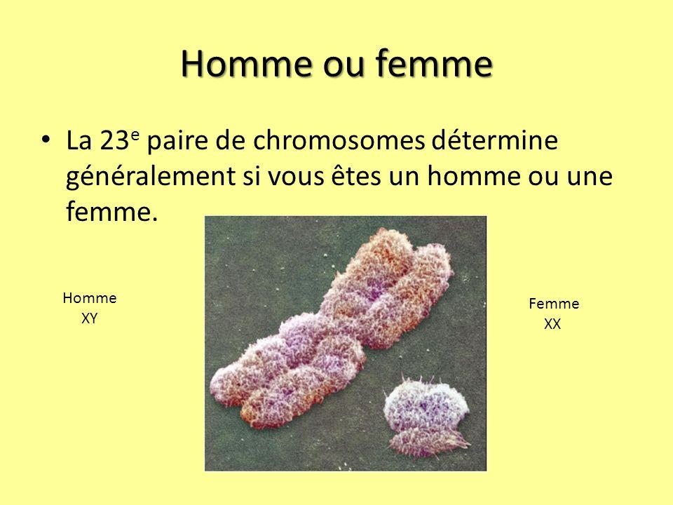 Homme ou femme La 23e paire de chromosomes détermine généralement si vous êtes un homme ou une femme.