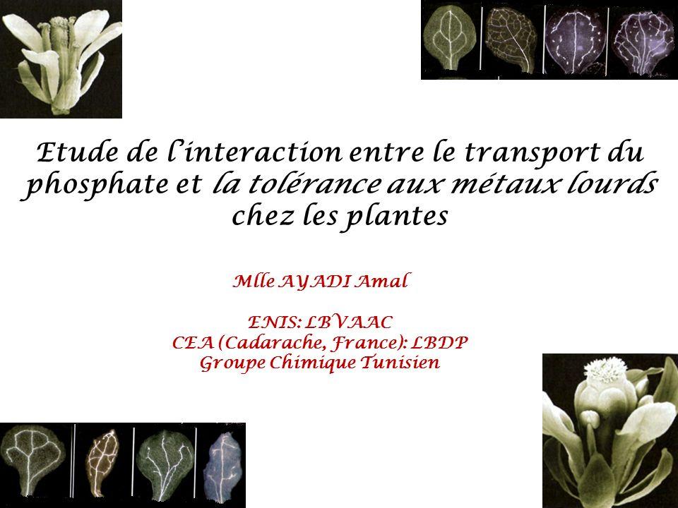 CEA (Cadarache, France): LBDP Groupe Chimique Tunisien