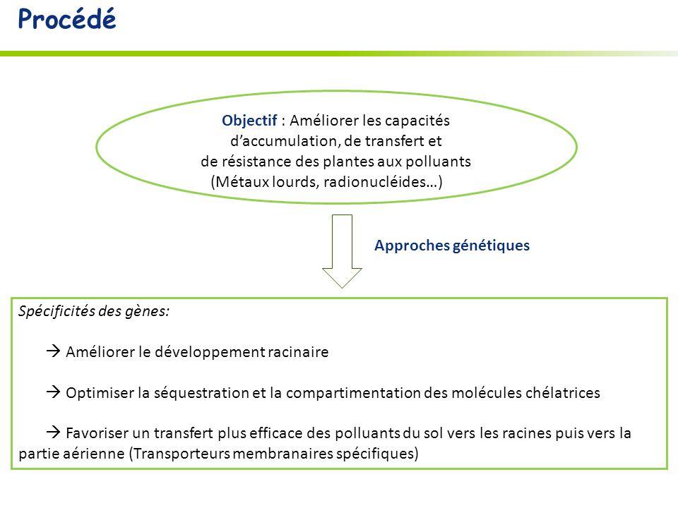 Procédé Objectif : Améliorer les capacités d'accumulation, de transfert et. de résistance des plantes aux polluants.