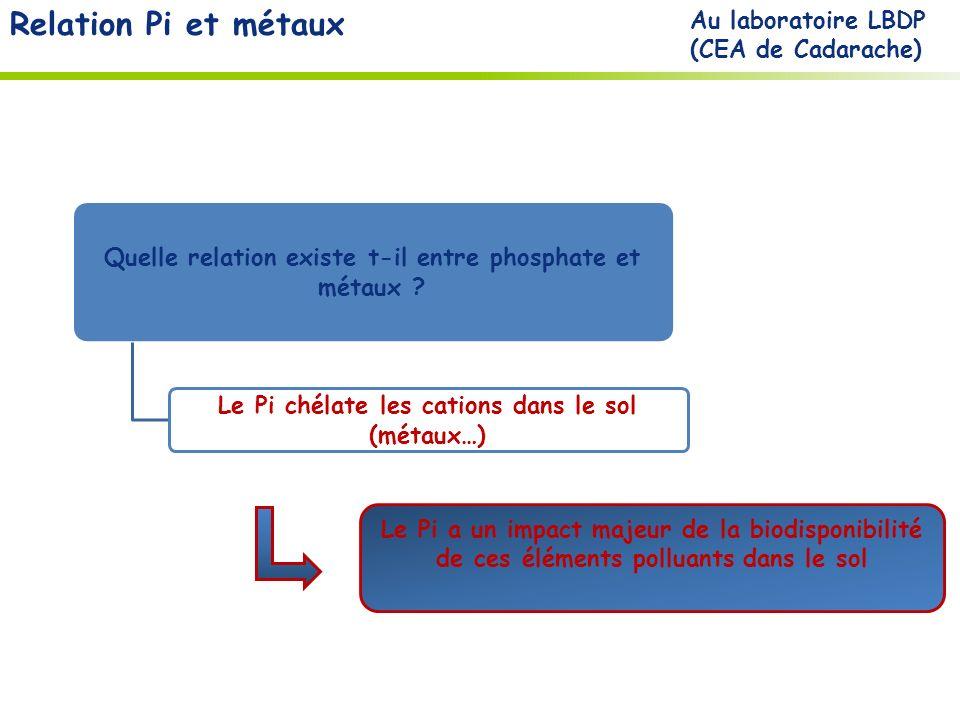 Relation Pi et métaux Au laboratoire LBDP (CEA de Cadarache)