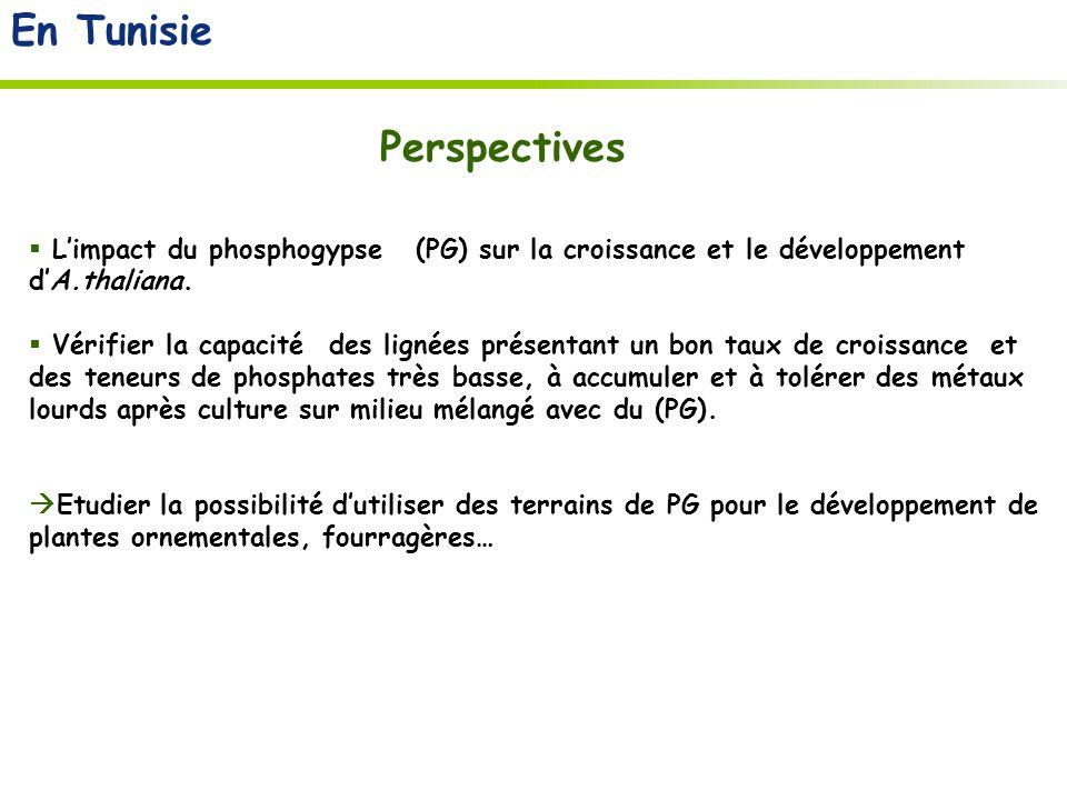En Tunisie Perspectives