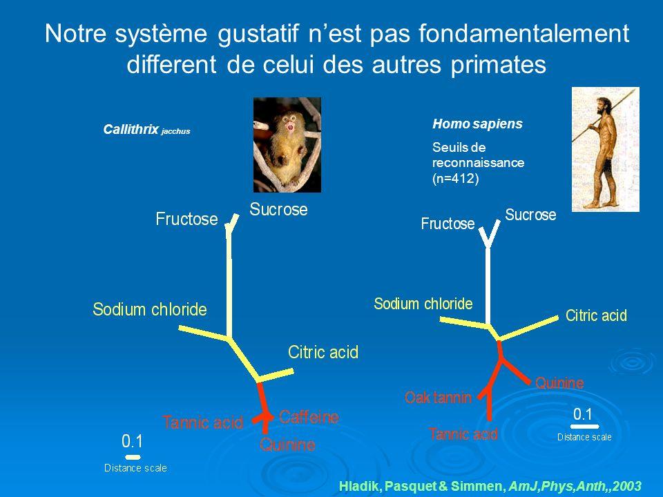 Notre système gustatif n'est pas fondamentalement different de celui des autres primates