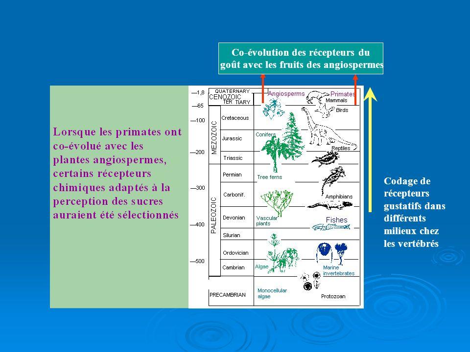 Co-évolution des récepteurs du goût avec les fruits des angiospermes