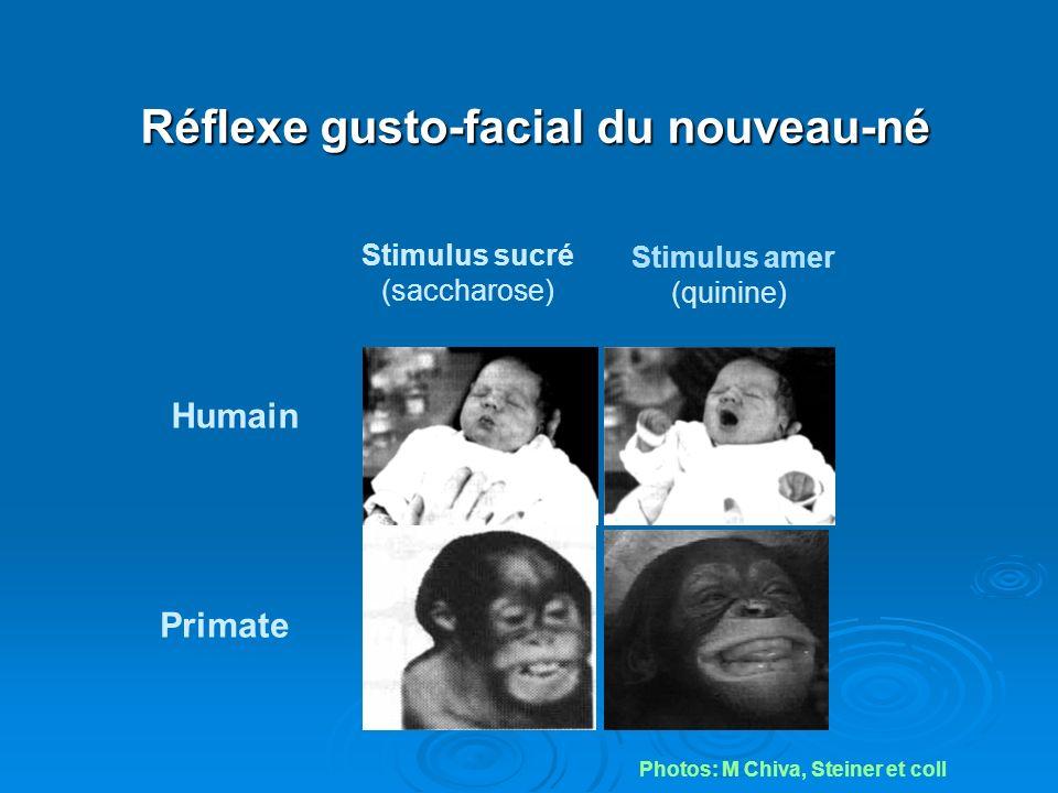 Réflexe gusto-facial du nouveau-né