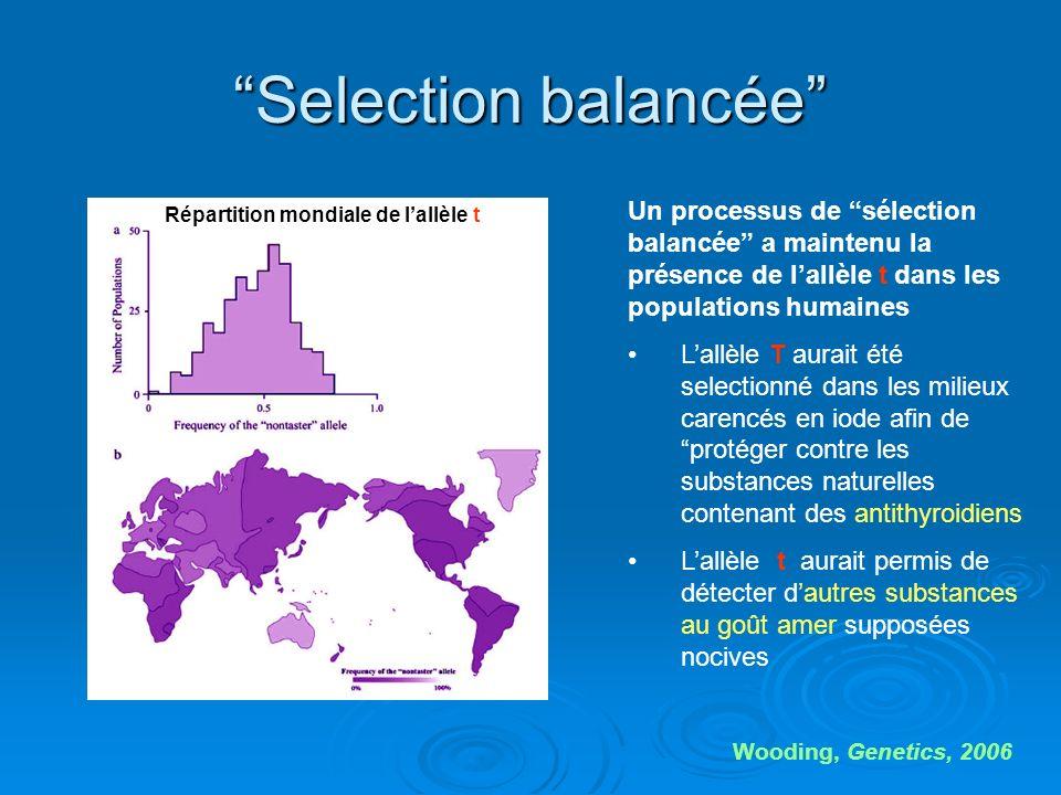 Selection balancée Un processus de sélection balancée a maintenu la présence de l'allèle t dans les populations humaines.