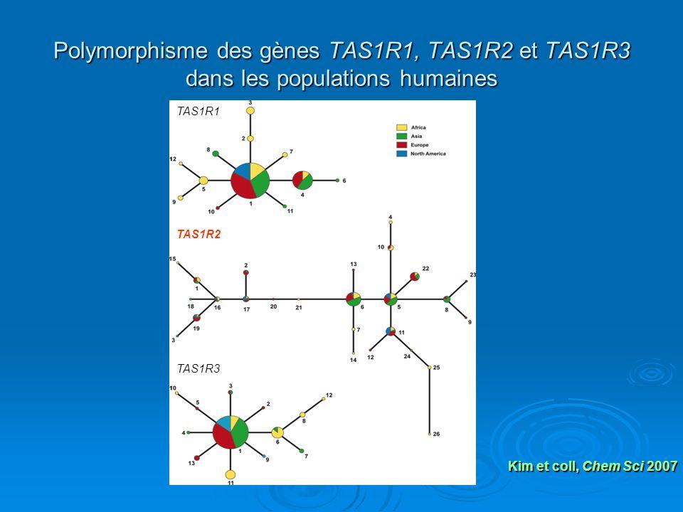 Polymorphisme des gènes TAS1R1, TAS1R2 et TAS1R3 dans les populations humaines