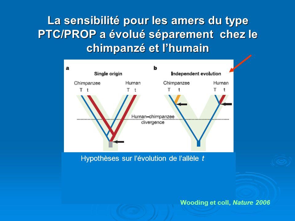 La sensibilité pour les amers du type PTC/PROP a évolué séparement chez le chimpanzé et l'humain