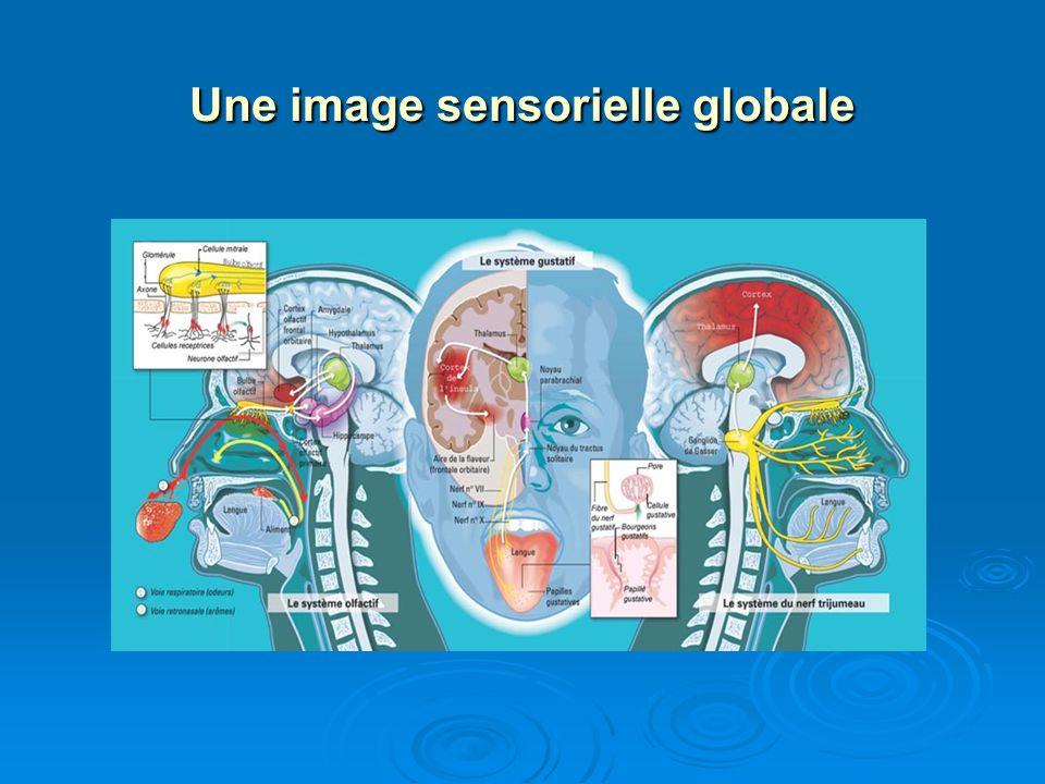 Une image sensorielle globale