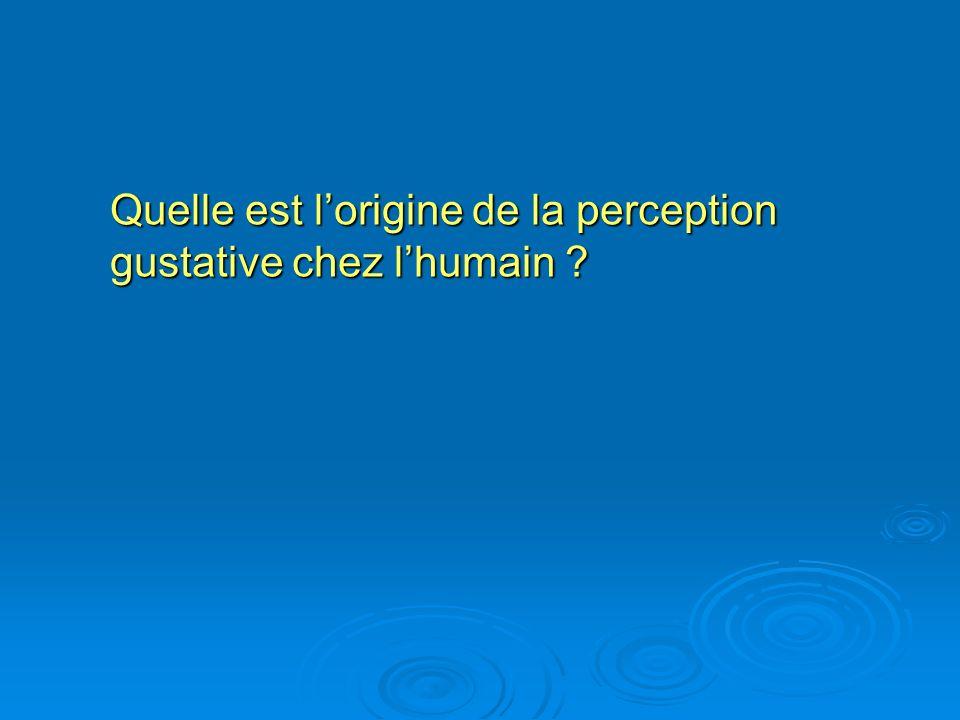Quelle est l'origine de la perception gustative chez l'humain