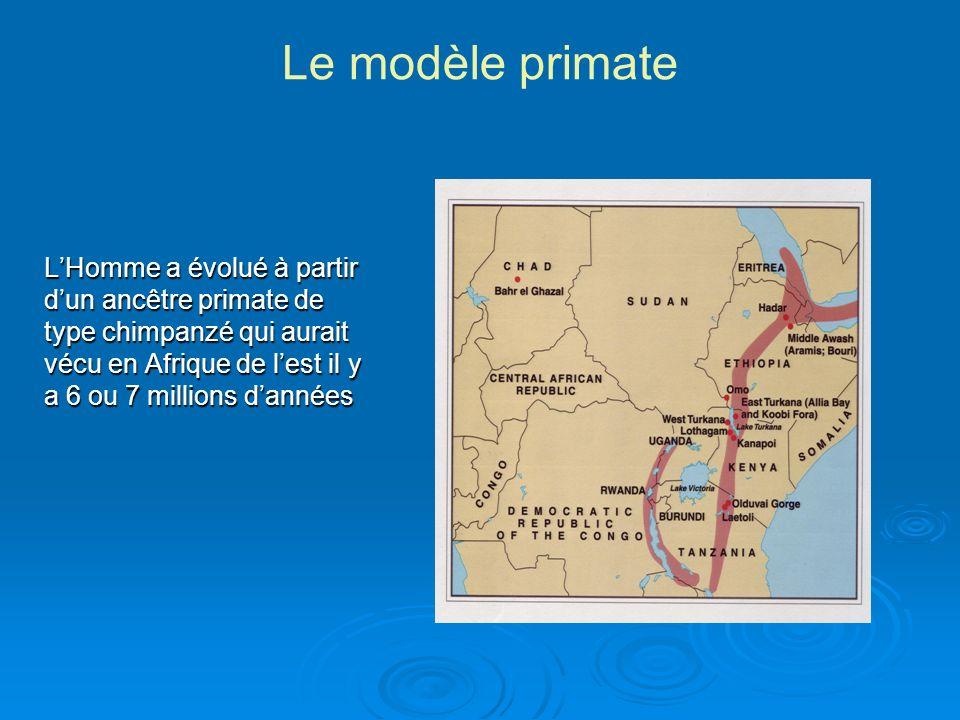 Le modèle primate
