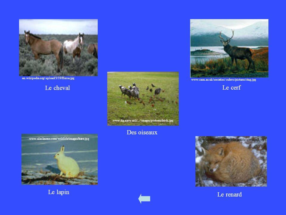 Le cheval Le cerf Des oiseaux Le lapin Le renard Chevel = horse