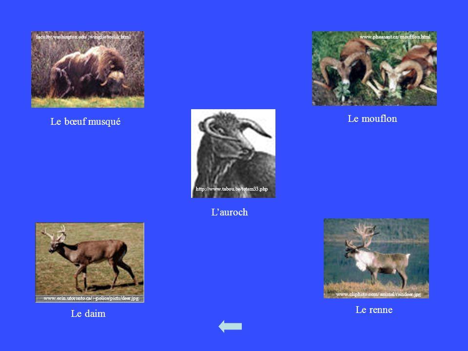 Le mouflon Le bœuf musqué L'auroch Le renne Le daim