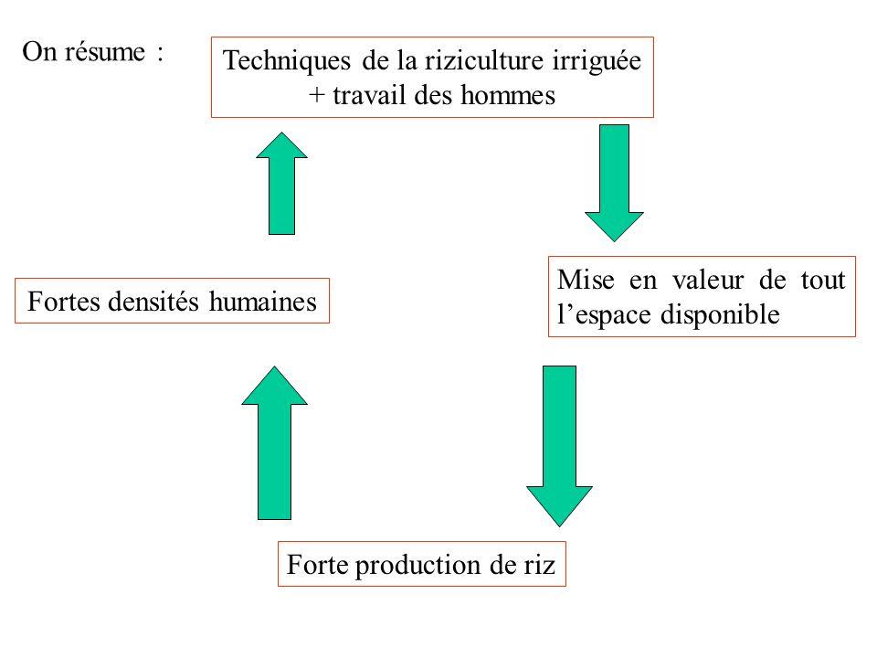 Techniques de la riziculture irriguée + travail des hommes