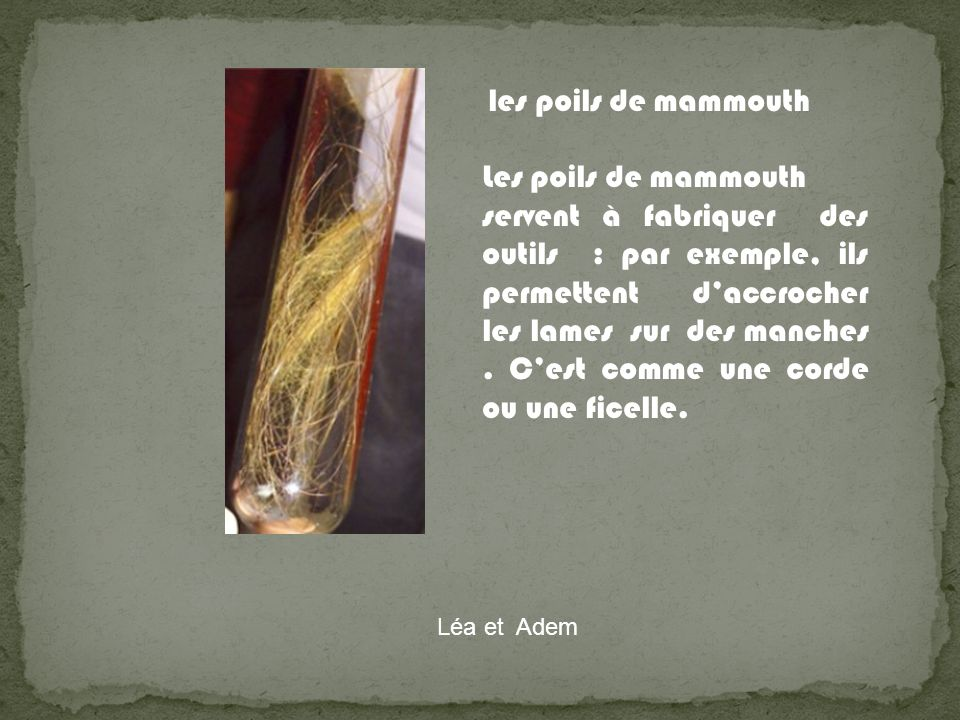 les poils de mammouth Les poils de mammouth.