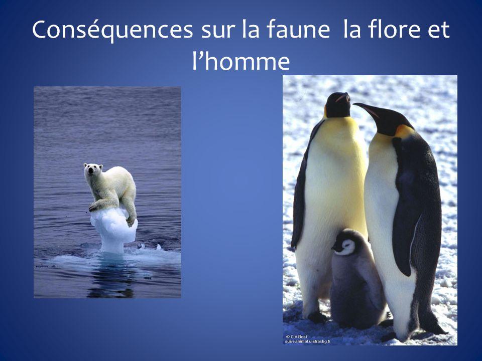 Conséquences sur la faune la flore et l'homme