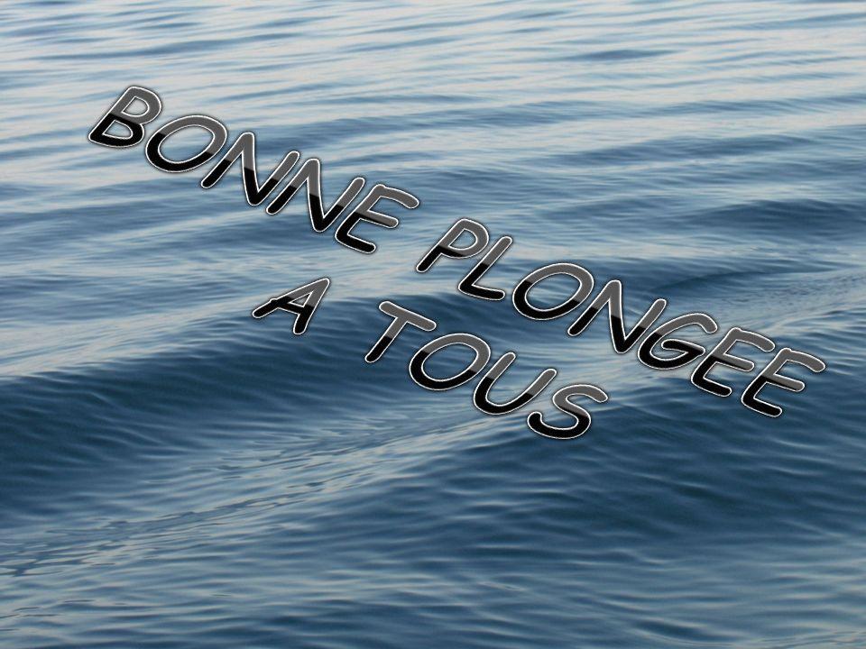 BONNE PLONGEE A TOUS