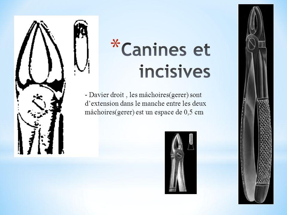 Canines et incisives - Davier droit , les mâchoires(gerer) sont d'extension dans le manche entre les deux mâchoires(gerer) est un espace de 0,5 cm.