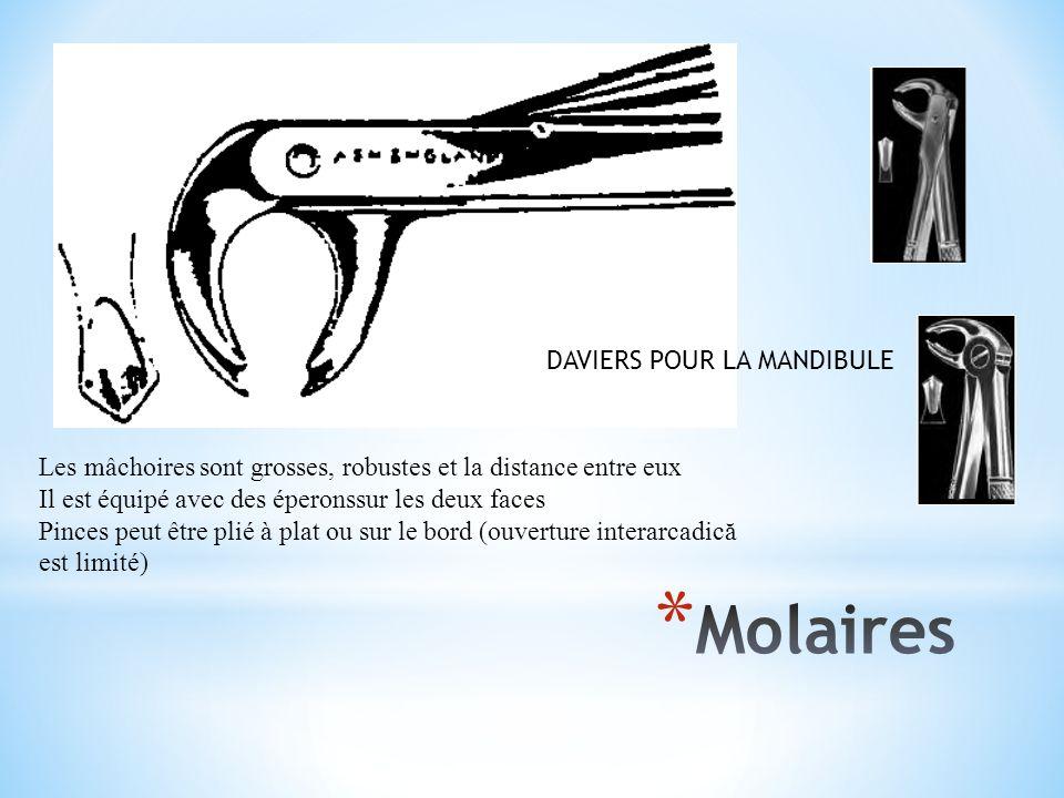 Molaires DAVIERS POUR LA MANDIBULE