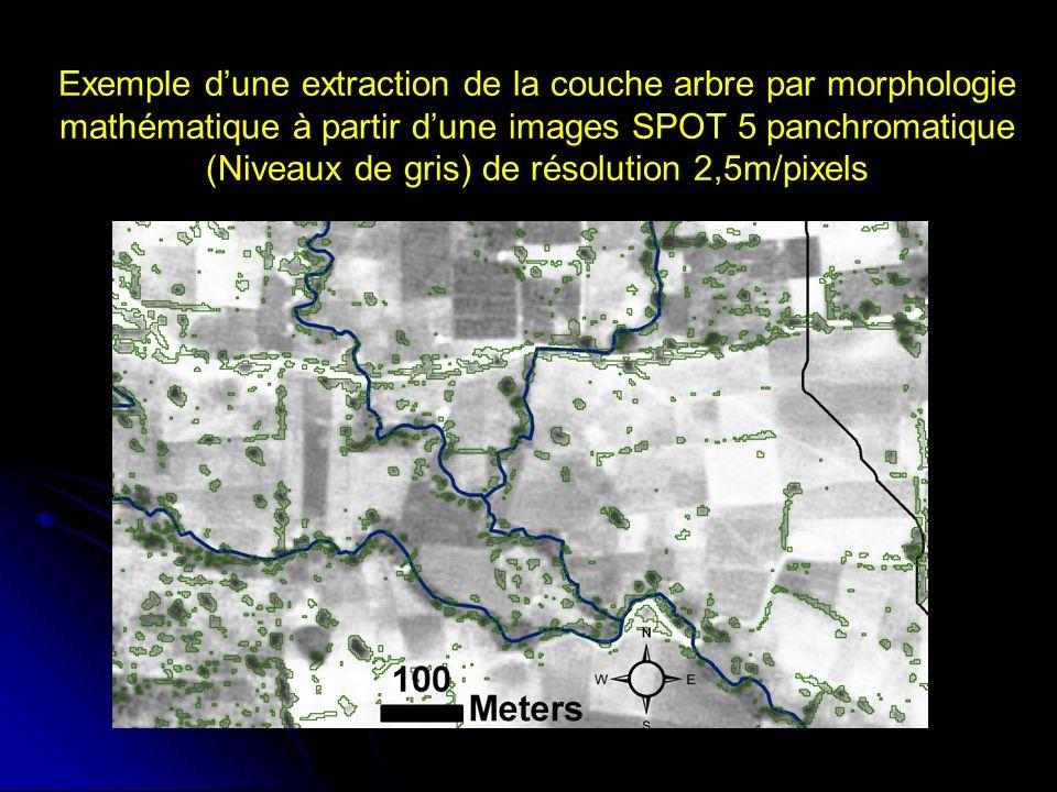 Exemple d'une extraction de la couche arbre par morphologie mathématique à partir d'une images SPOT 5 panchromatique (Niveaux de gris) de résolution 2,5m/pixels