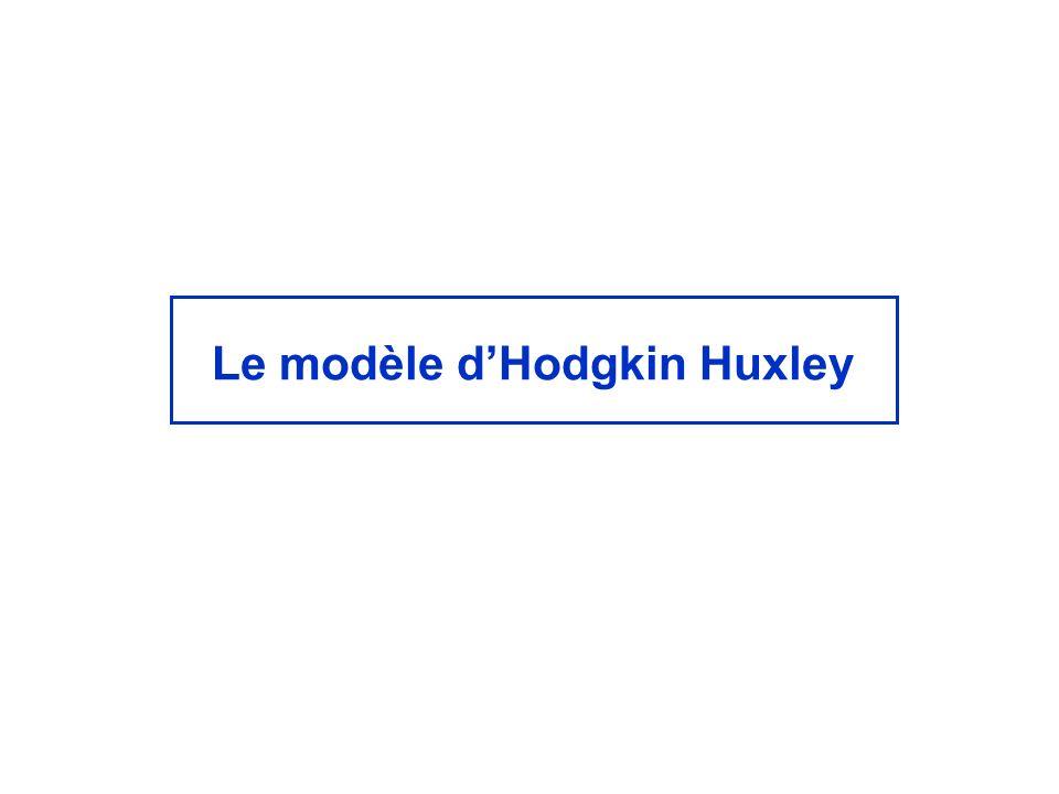 Le modèle d'Hodgkin Huxley