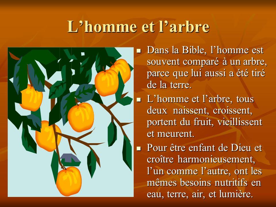 L'homme et l'arbre Dans la Bible, l'homme est souvent comparé à un arbre, parce que lui aussi a été tiré de la terre.