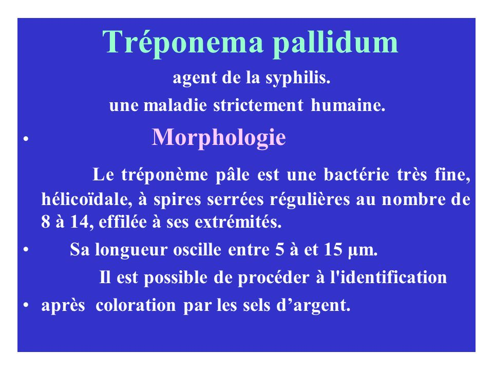 Tréponema pallidum agent de la syphilis. une maladie strictement humaine. Morphologie.