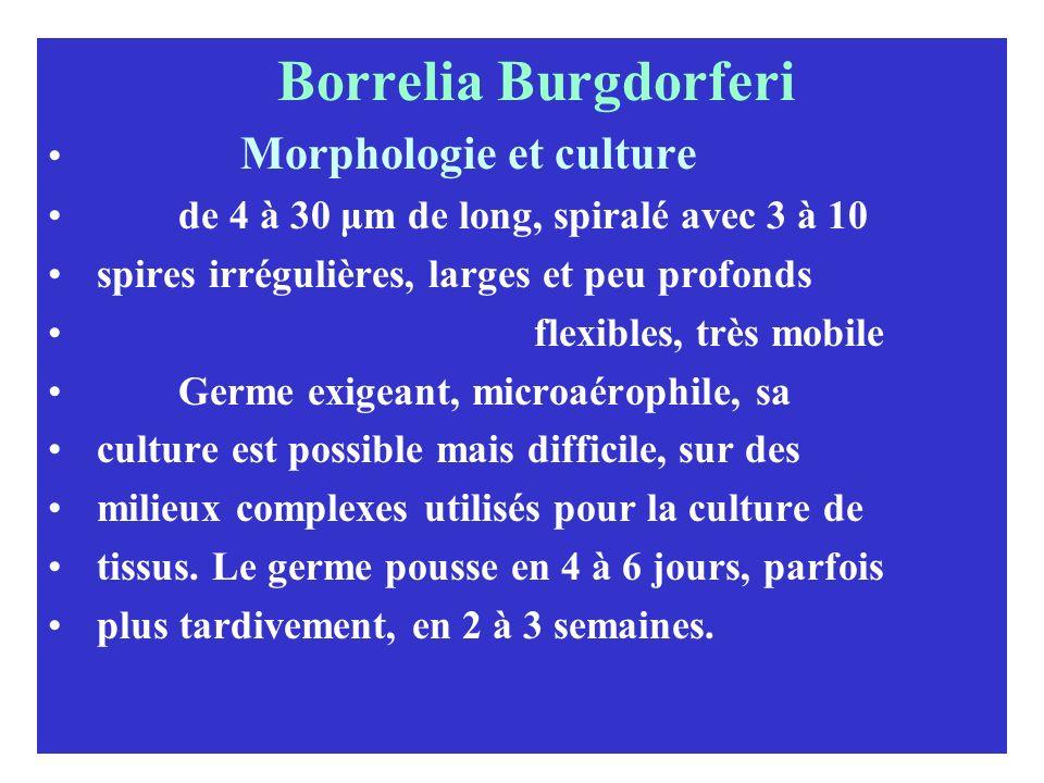 Borrelia Burgdorferi Morphologie et culture