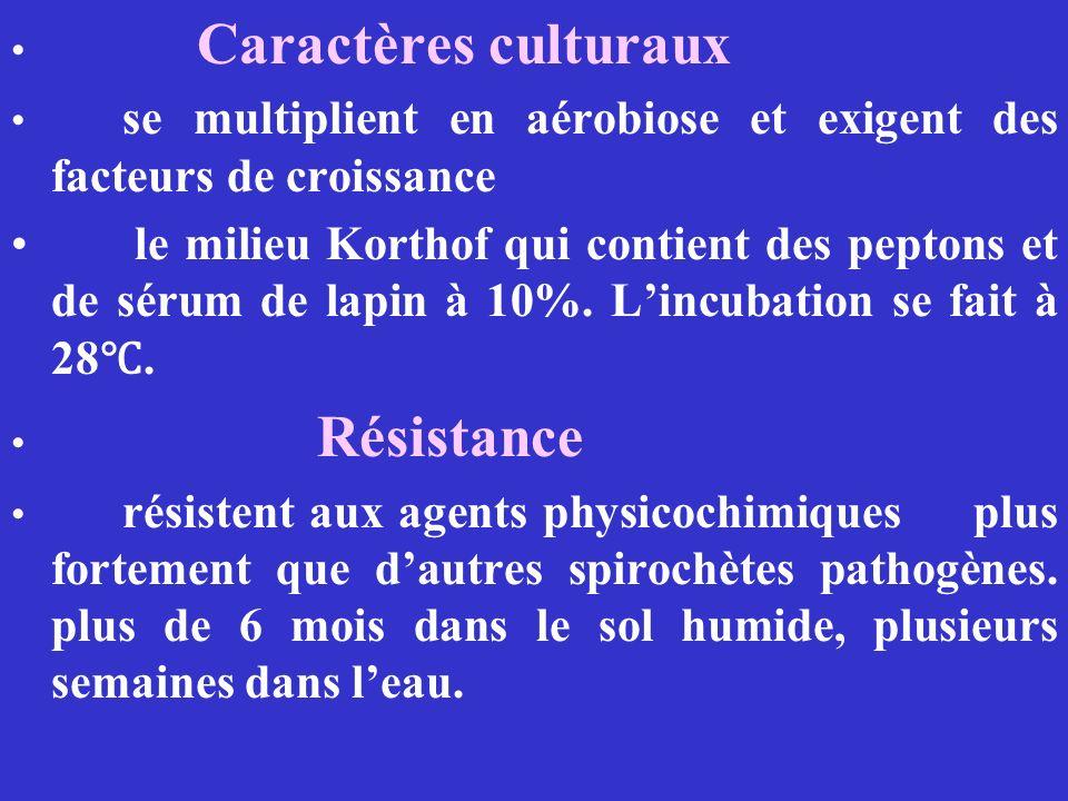 Caractères culturaux se multiplient en aérobiose et exigent des facteurs de croissance.