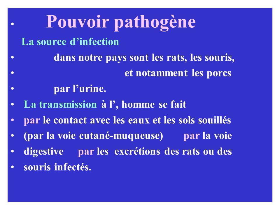 Pouvoir pathogène La source d'infection. dans notre pays sont les rats, les souris, et notamment les porcs.