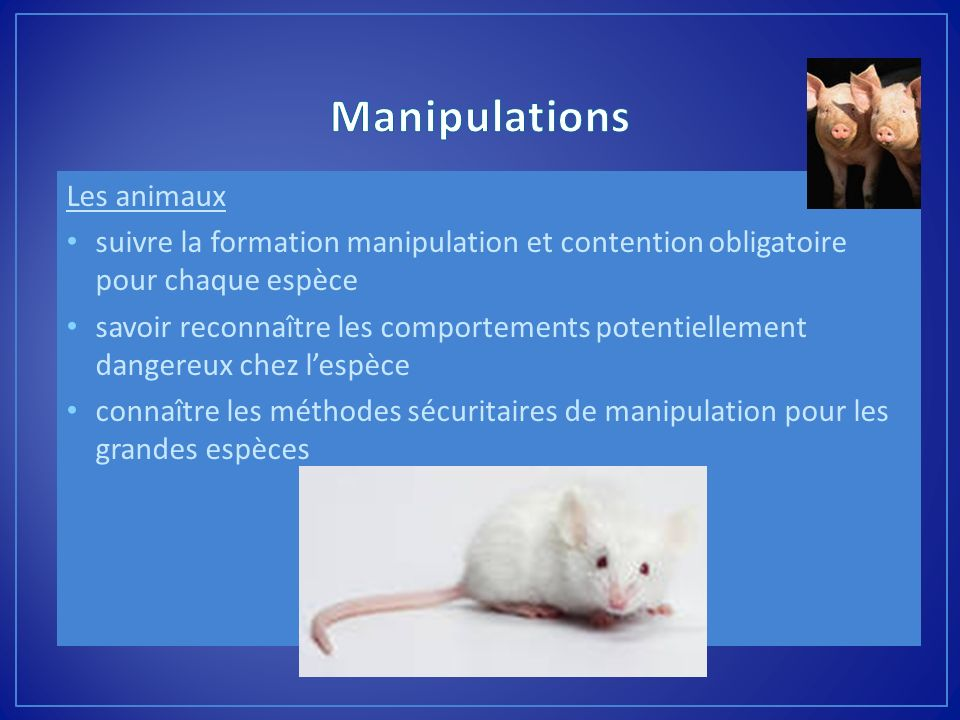 Manipulations Les animaux