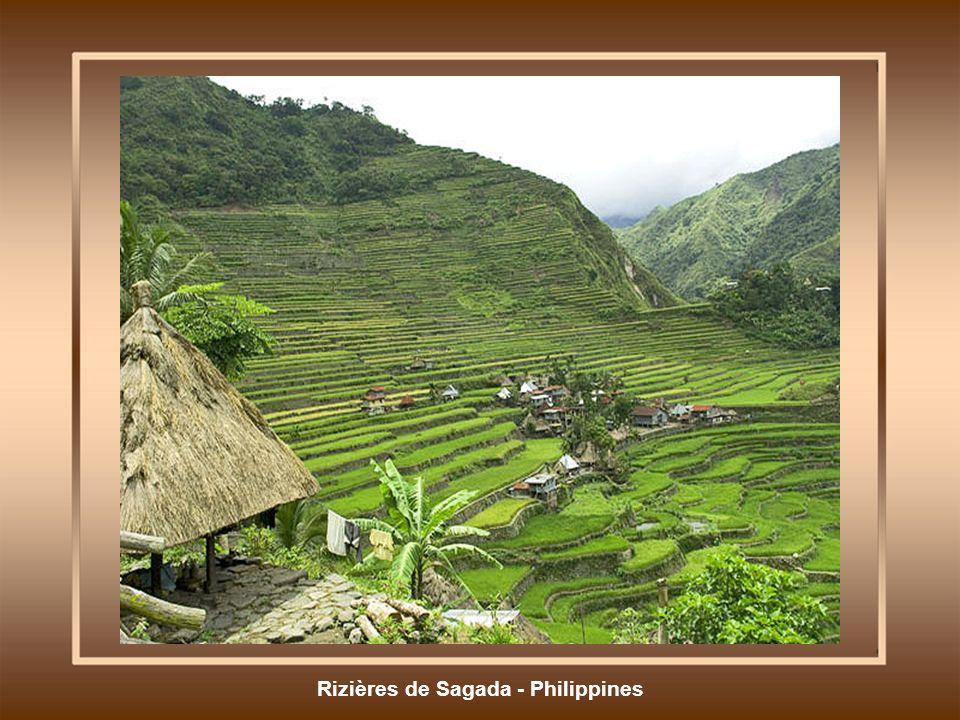 Rizières de Sagada - Philippines