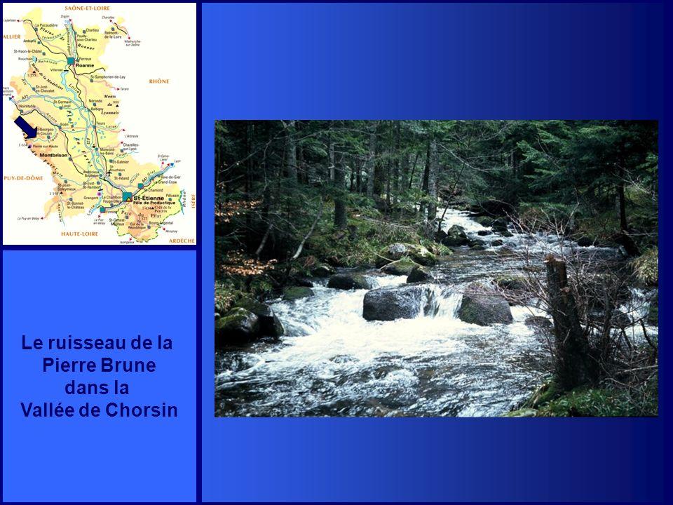 Le ruisseau de la Pierre Brune dans la Vallée de Chorsin