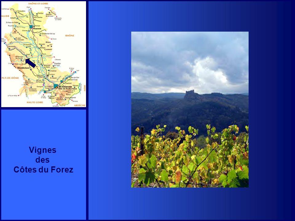 Vignes des Côtes du Forez