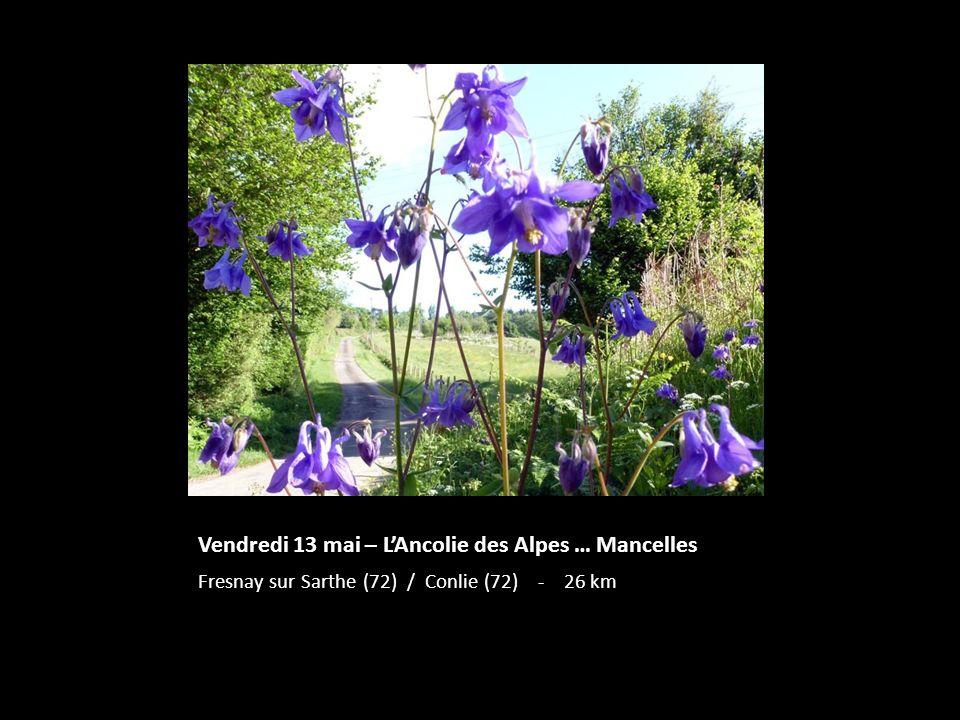 Vendredi 13 mai – L'Ancolie des Alpes … Mancelles