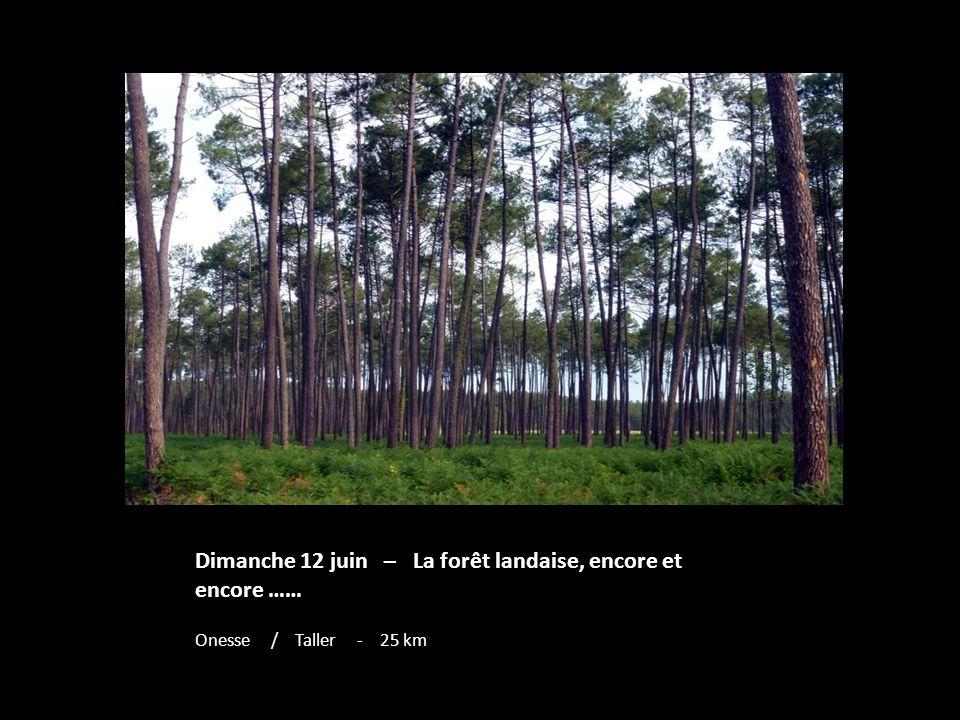 Dimanche 12 juin – La forêt landaise, encore et encore ……