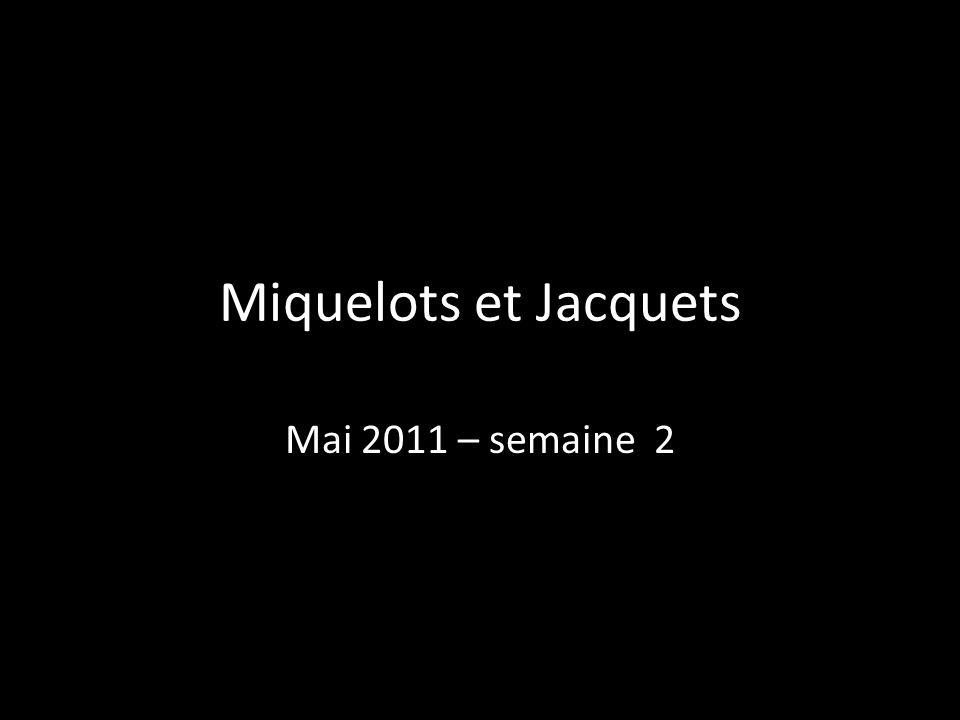 Miquelots et Jacquets Mai 2011 – semaine 2 9
