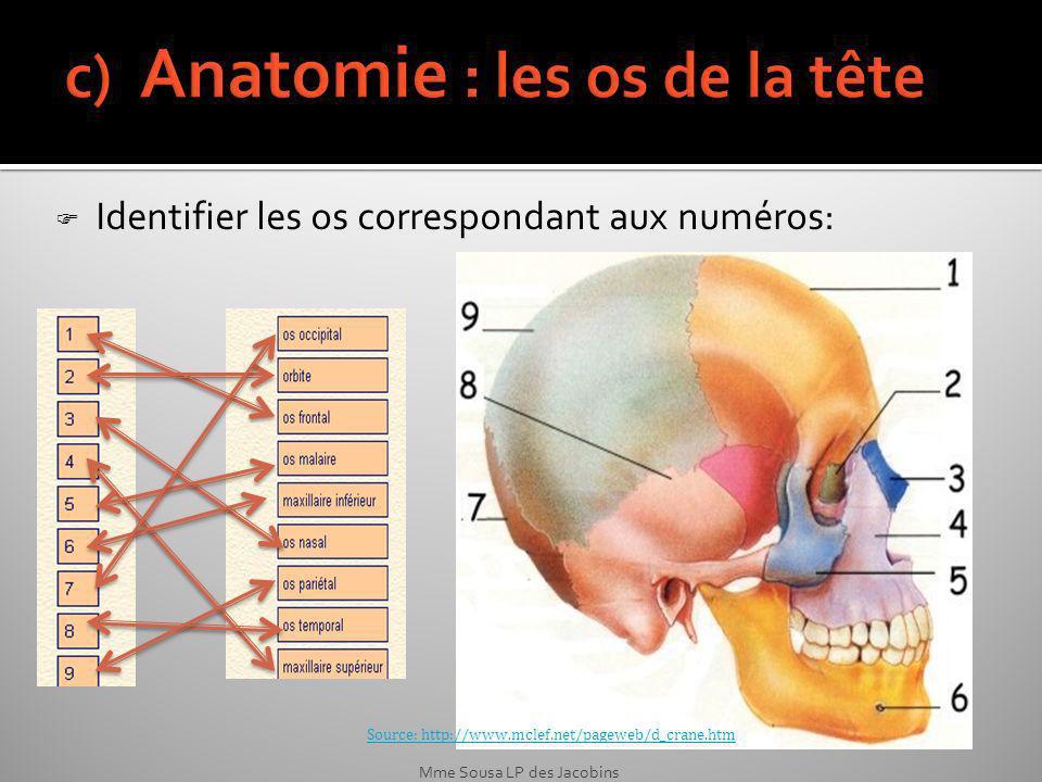 c) Anatomie : les os de la tête