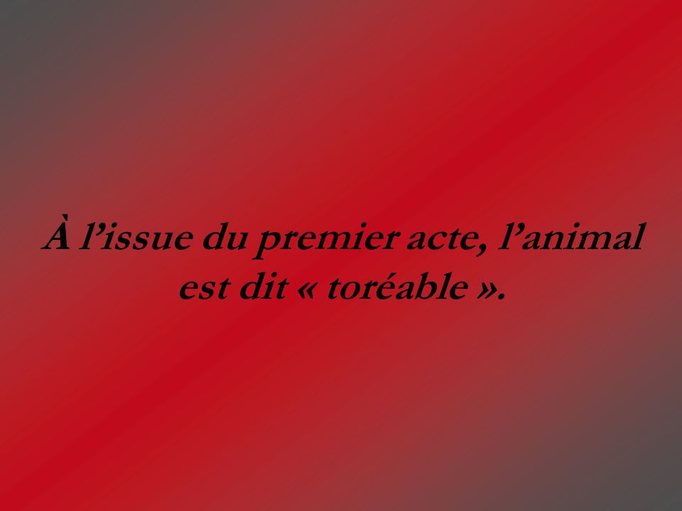 À l'issue du premier acte, l'animal est dit « toréable ».
