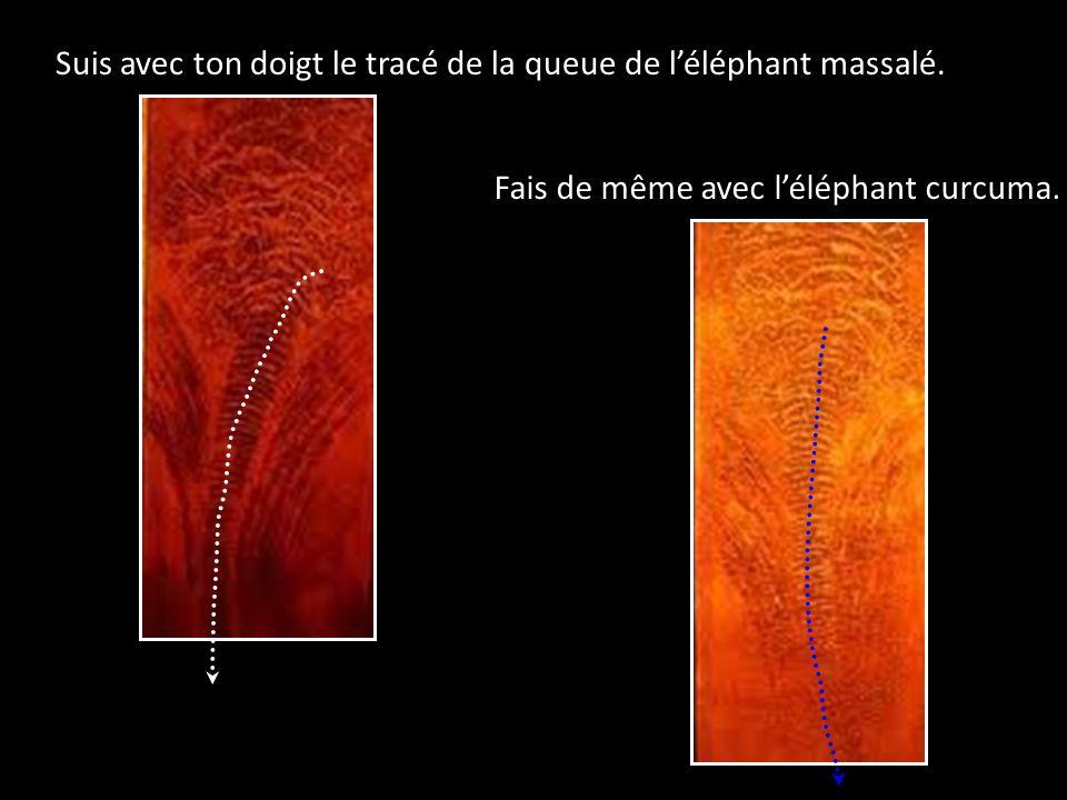 Suis avec ton doigt le tracé de la queue de l'éléphant massalé.
