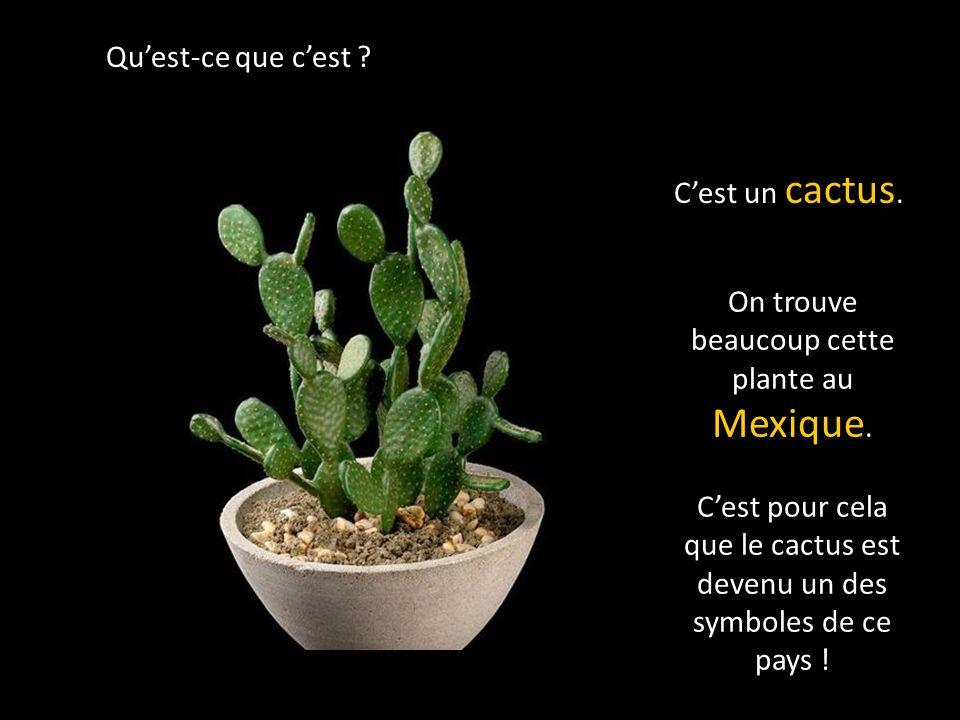 On trouve beaucoup cette plante au Mexique.